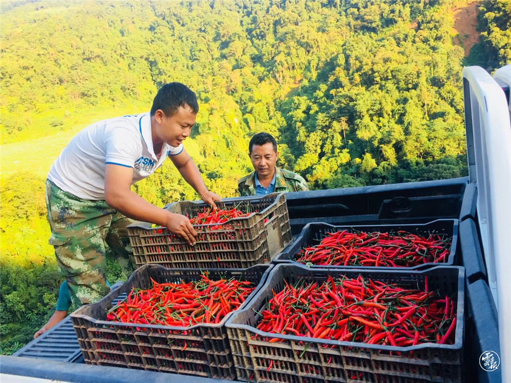 班洪乡群众现代农业产业助农增收(11195473)-20210822084811.jpg