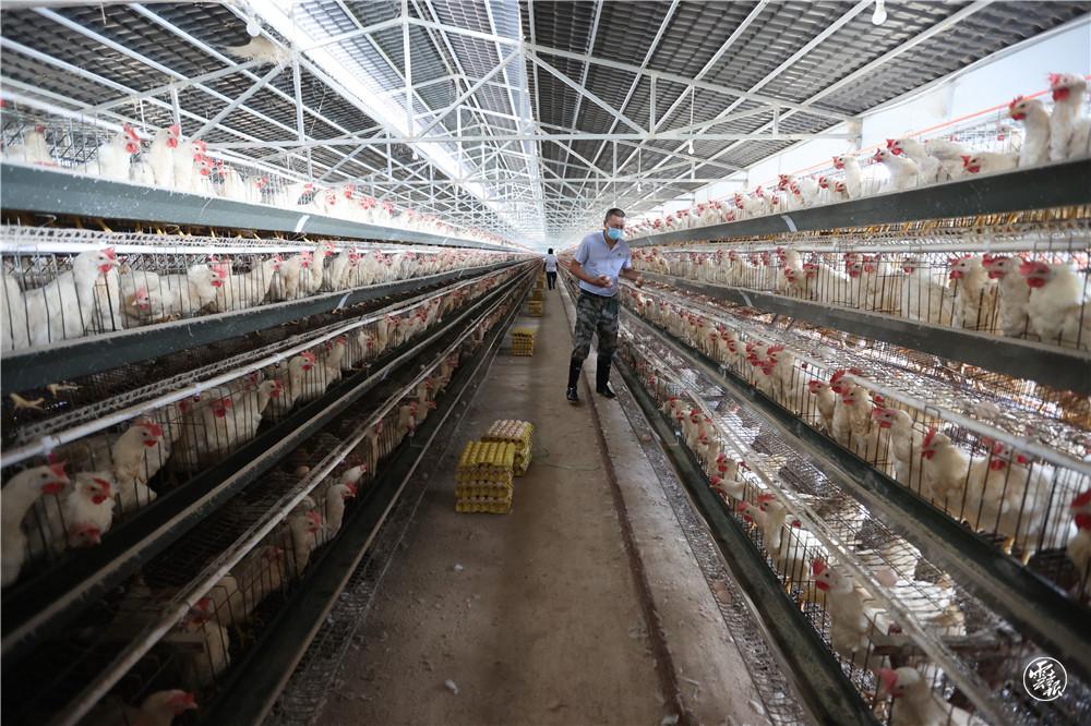 勐董镇刀董村委会养殖基地蛋鸡养殖场(11195467)-20210822084816.jpg